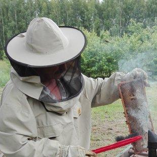 Arī šogad būs dabīgais medus, iegūts piemājas dravā!